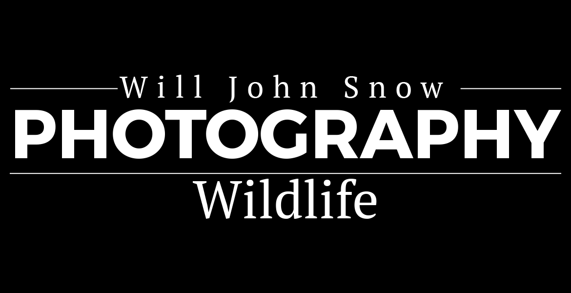 Photo-Wildlife Page Header